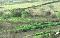 Cifran en 73 millones de euros las perdidas causadas por el campo en la provincia