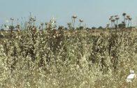 Casi seis millones de indemnización a ganaderos cordobeses por la pérdida de pastos