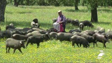 La producción final agraria de la provincia supone un récord con 1.505 millones de euros
