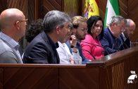 El Ayuntamiento se vuelve a reunir en una nueva sesión plenaria