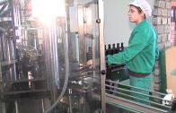 Desciende la producción de aceite en las almazaras de la provincia de Córdoba