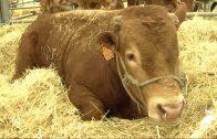 Córdoba tiene un 27 por ciento de todas las explotaciones de ganadería extensiva en Andalucía