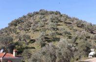 La Junta recuerda que se ha reclamado el mismo trato fiscal para el olivar cordobés y el jienense