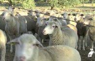 Asaja muestra su rechazo a la Ley de Agricultura y Ganadería de Andalucía