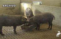 Más de 10 millones de euros para modernizar las estructuras agrarias en el norte de Córdoba