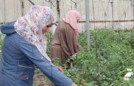El Ayuntamiento concede una subvención a la Asociación Europea de Cooperación con Palestina