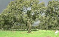 La Junta destina 11,7 millones de euros para conservación de los pastos en la dehesa